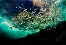 craig dietrich - underwater photography