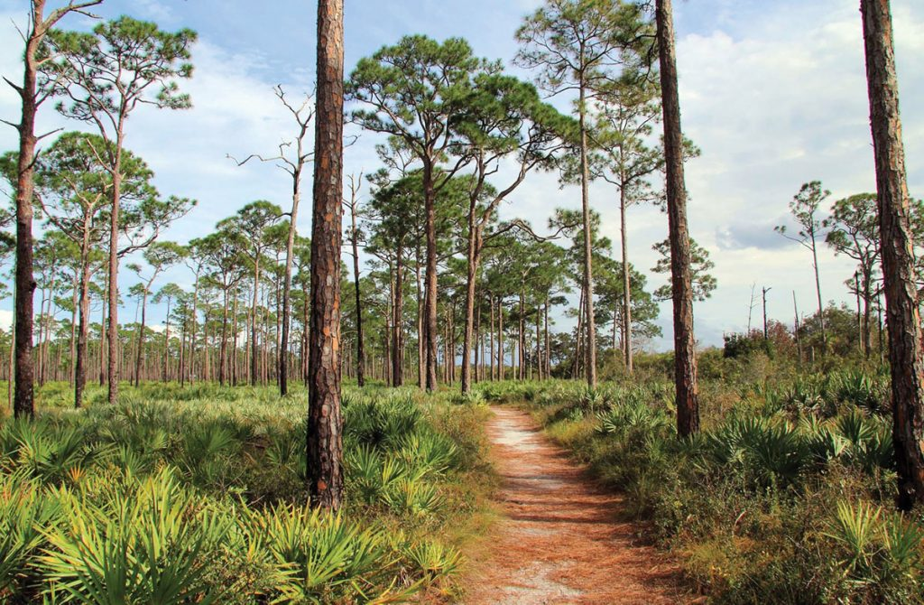 Jonathan Dickinson State Park, Earth Day 5K