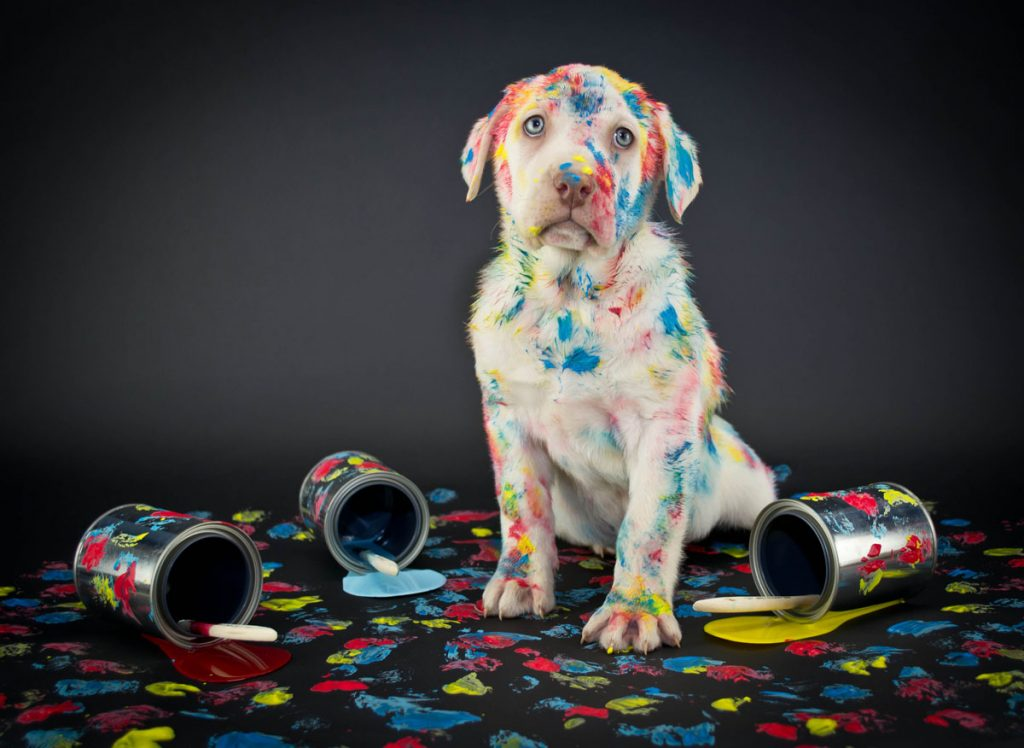 Paint with your pup at Arri's Portal