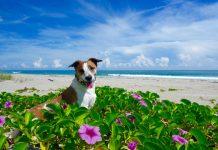 Sitting pretty at Jupiter Beach. Photo courtesy of @MyDogStink