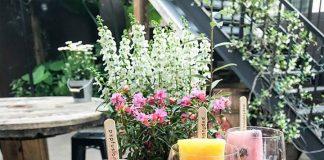 Wine pops, image courtesy of Summer Crush Vineyard & Winery